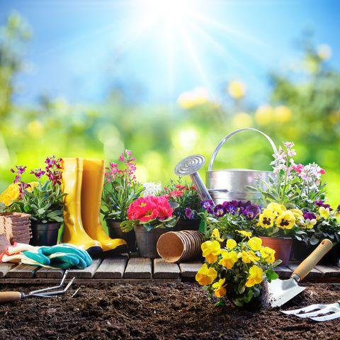 #poetry #poetrycommunity #poetrylovers #poetryonpaper #POEMS #PoemADay #poet #amwriting #blogger #blogging #blog #WritingCommunity #Writer #writing #bloggingcommunity #gardening #gardeningtips #gardens https://twitter.com/aseemrastogi2/status/1292941787414376449…pic.twitter.com/8WEdxBWTIp