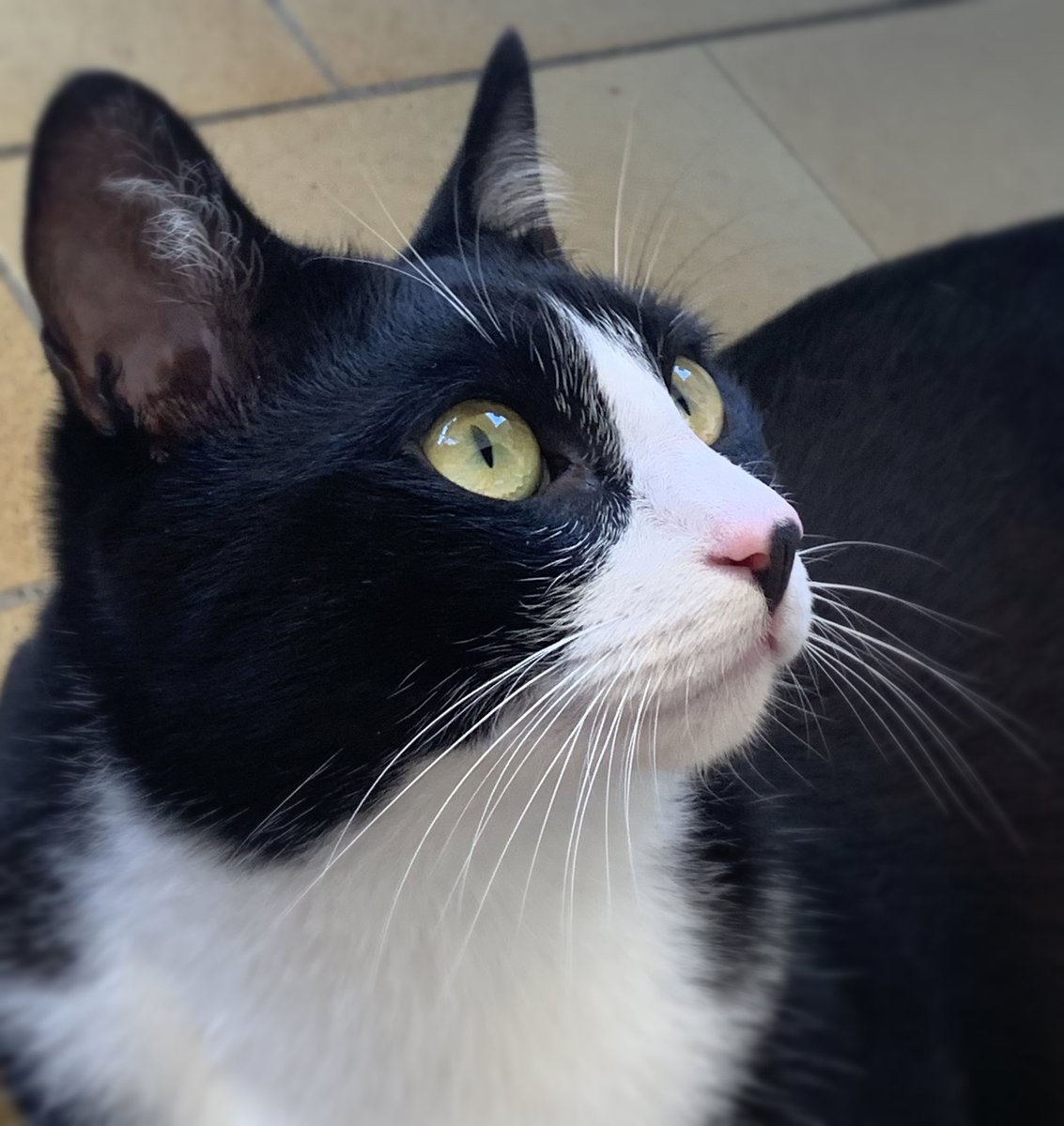 ARTÙ careful watcher | #cats #creativity #pets #meow #pets #kittens #kitten #catlife #catoftheday #kitty #cute #world #love #pet #dogs #animals #gatos #gato #lovecats #cutecats #love #life #follow #catlove #cutecat #petstagram #ilovemycat #animal #kittycatpic.twitter.com/EVxzlvcKc4