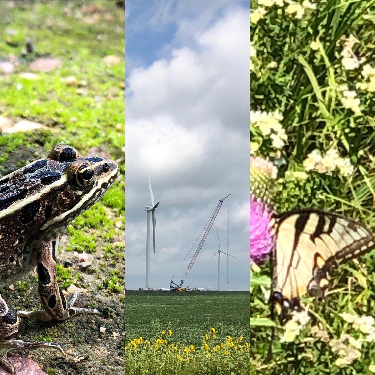 #workhard #flyharder.  #JWCrew wanted to share some of their photos of a location shoots. #windturbine #construction #tagging #butterflies #nature #memebrs #flyon (bonus) what's the max alt. allowed for wind turbine inspections? #popquizpic.twitter.com/bwBMHdBc2S
