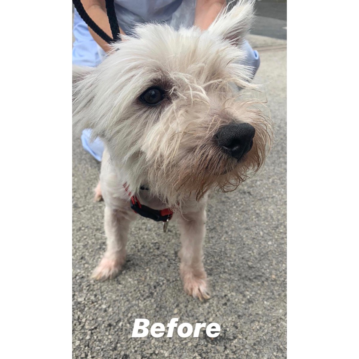 Lofty was signed over to our care in July, he had an untreated skin condition causing fur loss & red itchy skin & overgrown nails.. he now lives the life of luxury with his new family who adore him, he has well and truly landed on his paws 🐾 what a lovely happy ending 🐶🥰 (72)
