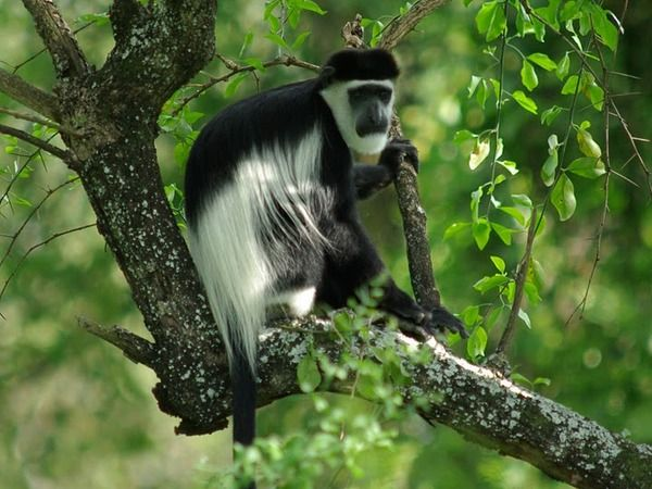 Tour To Kibale, Queen Elizabth And Bwindi Forests # https://t.co/VxOkN8pGMl Country: Uganda Duration:7 Day(s) -6 Night(s) Day 1: Drive to Kibale Forest National Park and overnight at Ndali Lodge/ primate lodge #ugandatourism #ugandatravel #ugandatours #ugandatrip #ugandavacations https://t.co/eGrYbBenx4