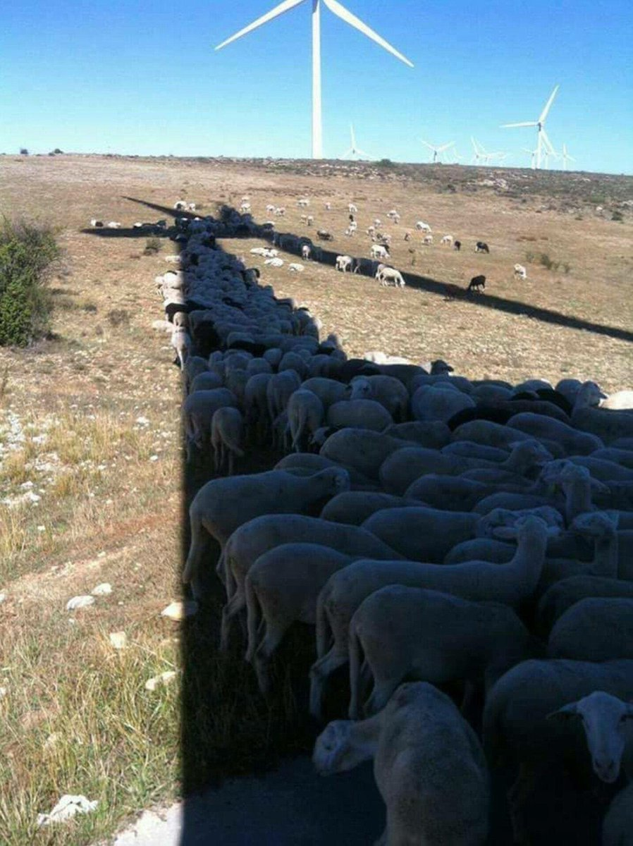 Sheep just love renewables ;) https://t.co/OquCI1CLs5