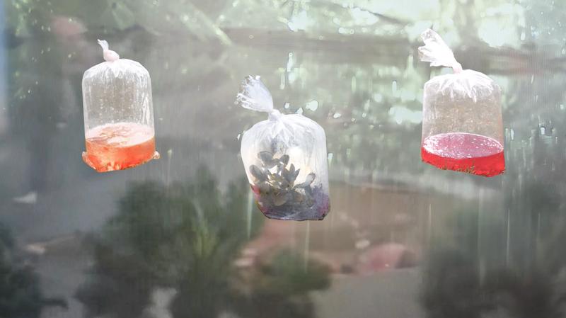 test Twitter Media - Im Offspace des #KlubderKünste zeigt Annika Juliane Schilling ab Freitag ihre Ausstellung DEAR EARTH, I THINK WE SHOULD SEE OTHER PEOPLE, eine atmosphärische Rauminstallation aus Objekten, Fotografie und Sound. Zu sehen bis 23. August.➡️ https://t.co/3KtEfkCPZM https://t.co/OSn0Nf4DIt