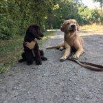 Image for the Tweet beginning: #Freunde finden in der #Hundeschule