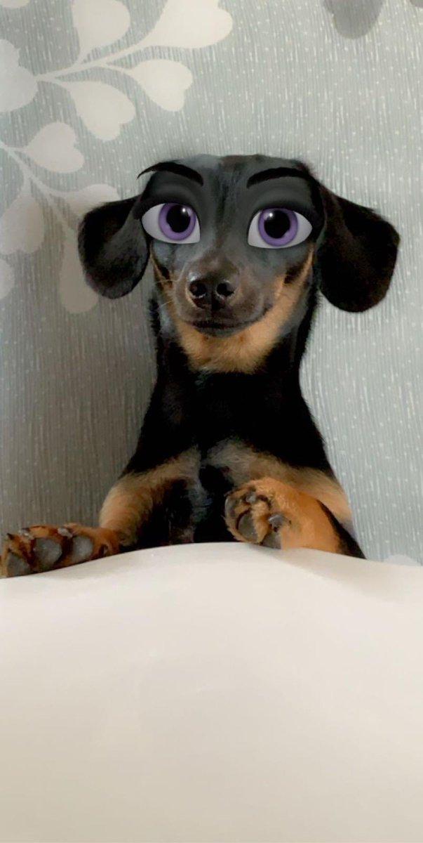 Mummy made me into a Disney dog   #dogsoftwitter #dachshund #Disney pic.twitter.com/YIreC6kwpe