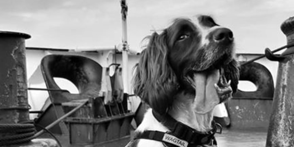 It's #TongueOutTuesday featuring an arty shot of live body detection dog Lenny.  #detectiondogs #detectiondog #snifferdogs #snifferdog #workingdog #workingdogs #dogsoftwitter #wagtailuk #dogs  #ukdogs #doglife  #dogslife #dogoftheday #dogphotography #spanielpic.twitter.com/M7gCz91oJv
