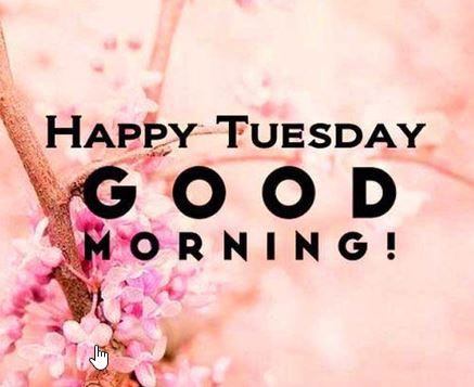 @CarlyJA22 @RosannaPhillip @Wipapa5 @BrendaBalazs @phyllisj1003 @HarleyDad731 @LouGarza86 @William15199186 @blueheartedly @sawmcdargh @maxedge051 @OzenRhoda @gggg45466 @BroxtonSpring @Missin_Florida @VonnieCalland Good Morning, Carly! Happy Tuesday. Stay safe.💙☕️😷