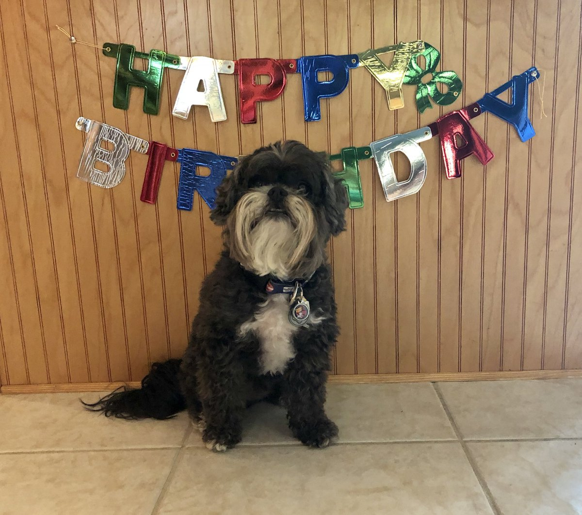 Happy Birthday to me! I'm 9 years-old today.  I'm hoping for a bacon cake!  #HappyBirthday #HappyNinthBirthdaypic.twitter.com/SQBeuD6JyX