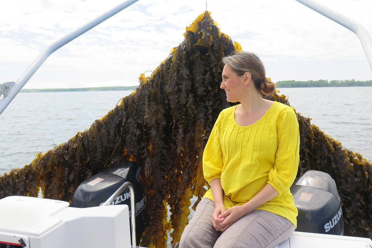 Cattle are one of the largest human-caused sources of the potent greenhouse gas methane – but ocean #algae may be able to help solve this climate problem. Join Dr. Nichole Price TONIGHT to learn more!  Register for this virtual #CaféSci event: https://t.co/JNCMErh4HR https://t.co/ZFaTKPfAr5