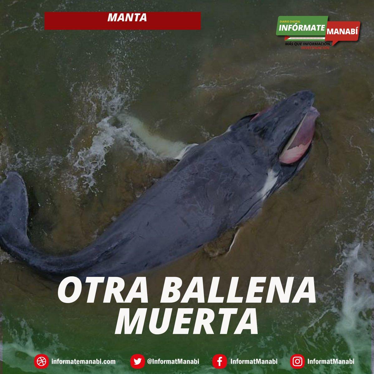 #MANTA  | Otra ballena muere En menos de un mes un cetáceo aparece muerto en las playas de Santa Marianita.  Esta vez se trata de un ballenato al que incluso se le desprendió la mandíbula reportan testigos. Ocurrió este 11 de agosto @MiJocay @agustinintriago  @bessygranjaOKpic.twitter.com/0dMxrNl5FS