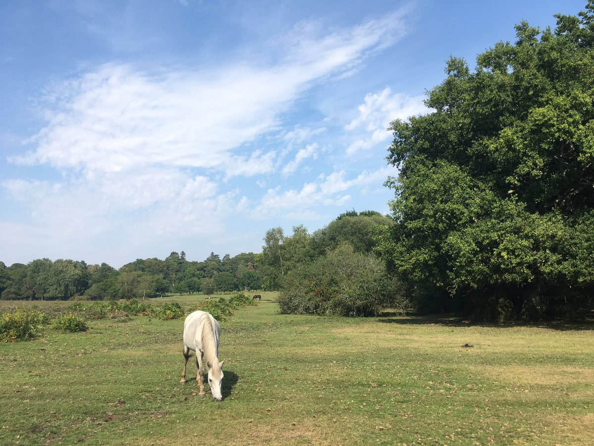 Enjoyed a rather splendid New Forest 4-hour solo hike in 33 degree heat this weekend! #naturelover pic.twitter.com/FzPQ6ojDkh
