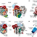 Image for the Tweet beginning: Megadalton chromatin remodelers: common principles
