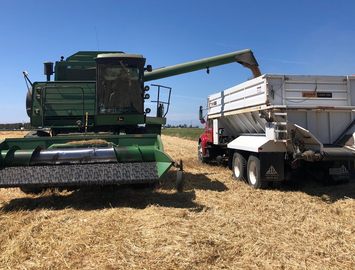 This is our beer run !... Our barley combines are out harvesting and if the moisture content is low enough this will be malted for #farmfreshbeer #organicbarley #ladnerisawesome https://t.co/dmuKpUp9TH