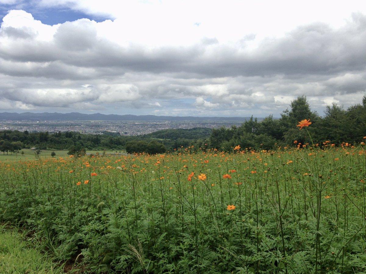 Tweeting photos of flower and landscape. #wind #carp #thunder #summer #swallows #hawks #flowerpic.twitter.com/07GVEfgwkp