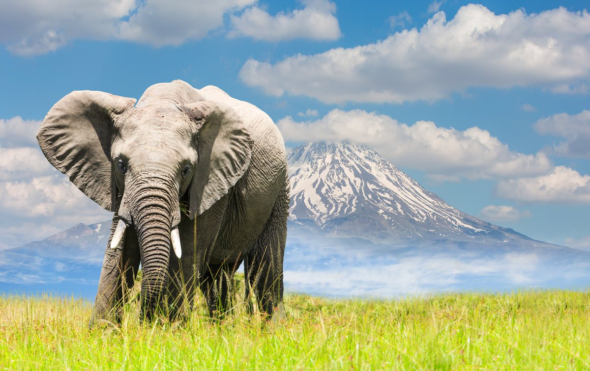 Today is World Elephant Day. It aims to bring the world together to help elephants .   🐘  🐘  🐘  🐘  🐘     #WorldElephantDay #flysafarilink  @wrldelephantday https://t.co/wnng8VIv7h