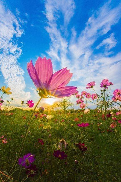 Good morning.  Have a nice day. #nature #nature撮影会 #naturelovers pic.twitter.com/V5zdtJMCfK