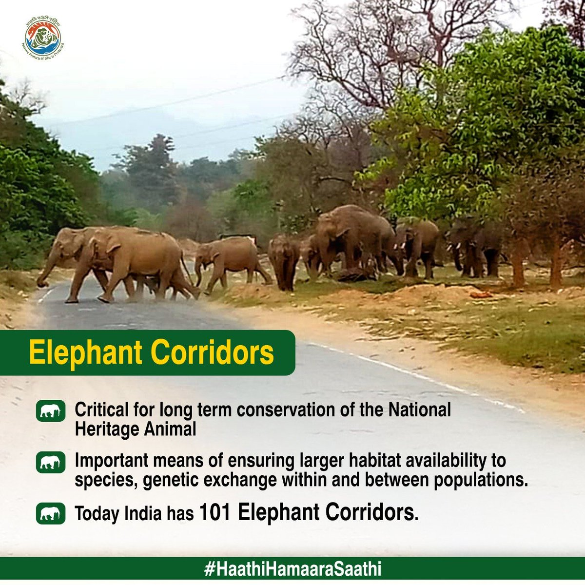 #HaathiHamaaraSaathi 🐘India has 60% of global Asian Elephant population 🐘India has established 30 Elephant sancuries & 101 Elephant Corridors in India. #WorldElephantDay2020 https://t.co/62y7bRYfrT