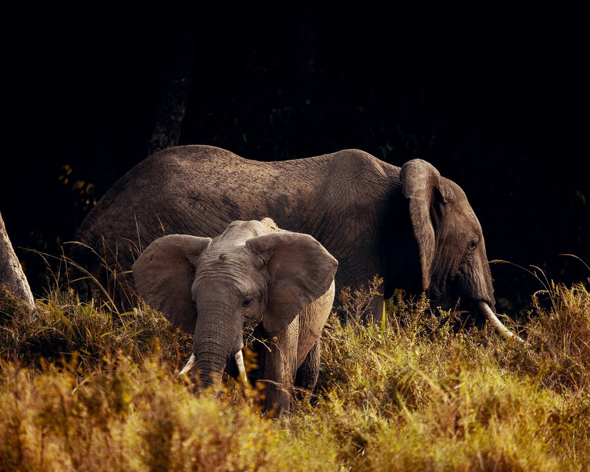 Spending the day with these peaceful giants is always a humbling experience. #worldelephantday