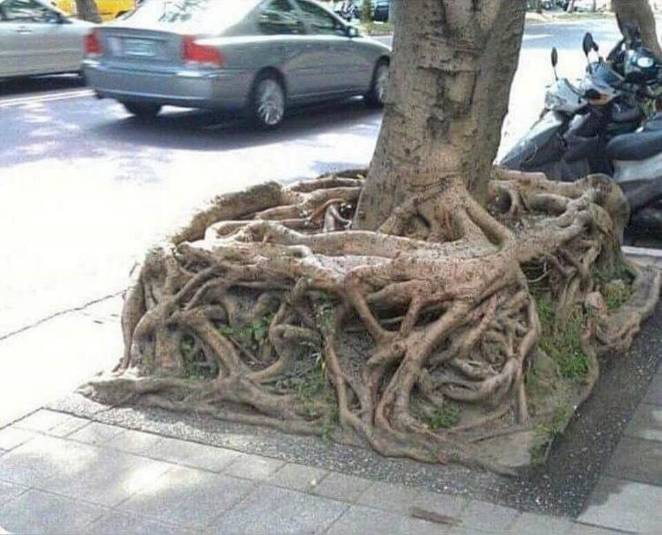The square root we have been looking for 😂