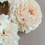 Image for the Tweet beginning: Some beautiful dahlias to get
