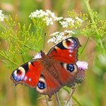 Image for the Tweet beginning: Spotting brilliant summer butterflies    #butterfly