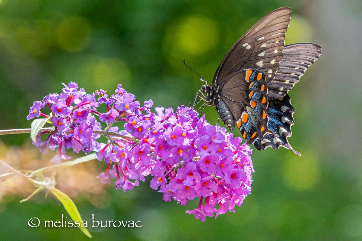 I want to live where it's always Butterfly Season.  #cleveland #ilovebutterflies https://t.co/2OqJd6smC4