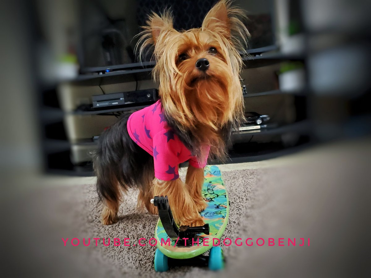 I enjoy riding this thing, but it's more fun to pull it around the house. #wednesdaymorning #heatwave #dogsoftwitter #YouTuber #Youtube #Skater https://t.co/AxSHMeZC6D