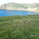 Image for the Tweet beginning: #collies back on the Shiants