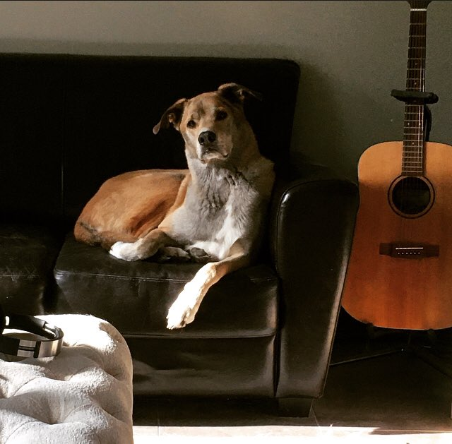 He guards the acoustic when I drink too much to make sure I'm not *that guy* at parties.