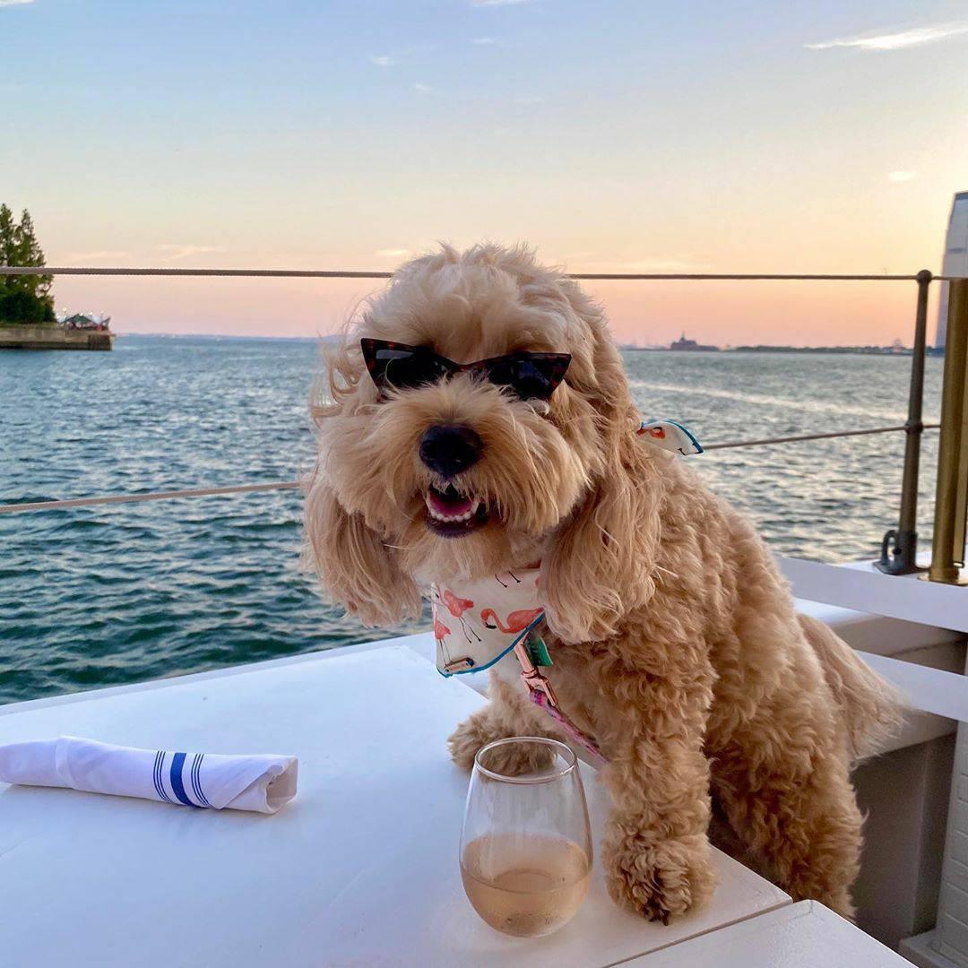 Vacation vibes   Follow us for more @thehappydogshop    kenziethecavapoo   #dogsofinsta #dogsofinstagram #happydogpic.twitter.com/zkZN1acxGP