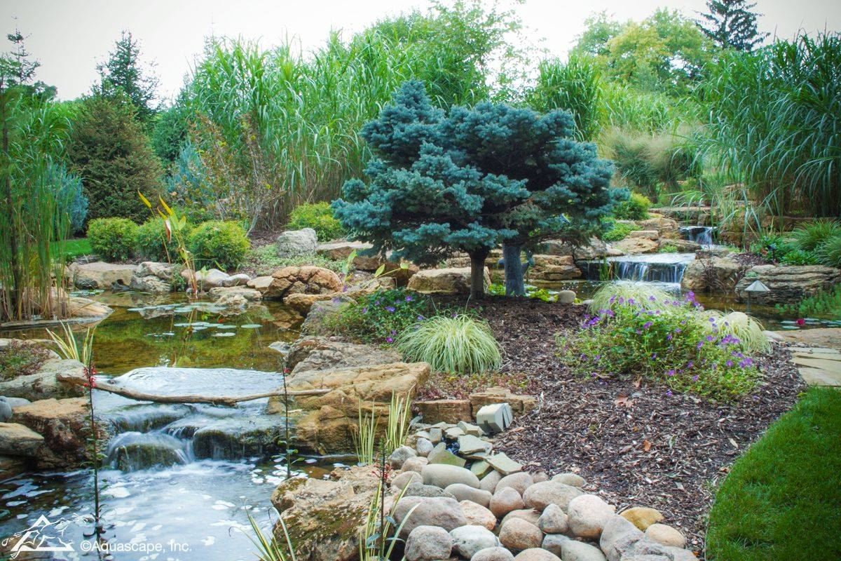 Aquascape Inc On Twitter An Ecosystem Pond Can Be Low Maintenance If You Include Fish And Aquatic Plants To Help Balance The Water Quality Learn More Https T Co Ck6yfx0c4u Https T Co 1bmu2a4puc