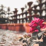 Image for the Tweet beginning: La fuente y la rosa.- . 📸