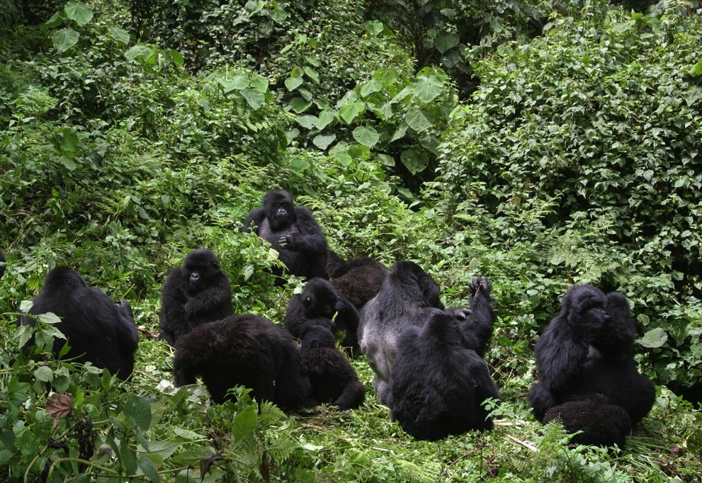 We help all tourists from world over book their short or long gorilla trekking safaris. Here are samples to the different packages  https://t.co/vnV2r5Oj0a #rwandagorillatours #gorillatours #gorillatrekkingrwanda https://t.co/UZ2u6Ifk2F