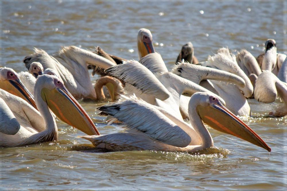 "tineke fieggen on Twitter: ""Djoudj National Bird Sanctuary - Senegal https://t.co/waNHP0brk7 Situated in the Senegal River delta, the Djoudj Sanctuary is a wetland of 16,000 ha, comprising a large lake .... 5"