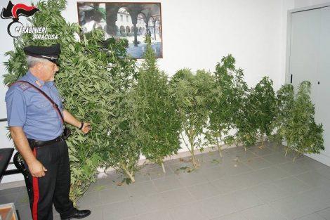"""Coltivare droga in casa, la nuova """"moda"""" nel Siracusano, scoperta piantagione a Noto - https://t.co/HGg0sfg7nO #blogsicilianotizie"""