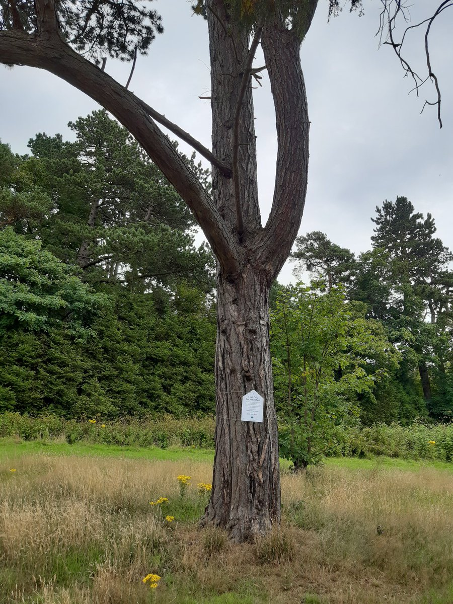 Adopting a tree can be a great way to leave a lasting legacy here are some options #corstorphinehill #colintondell #ravelstonwoods  @EdinOutdoors