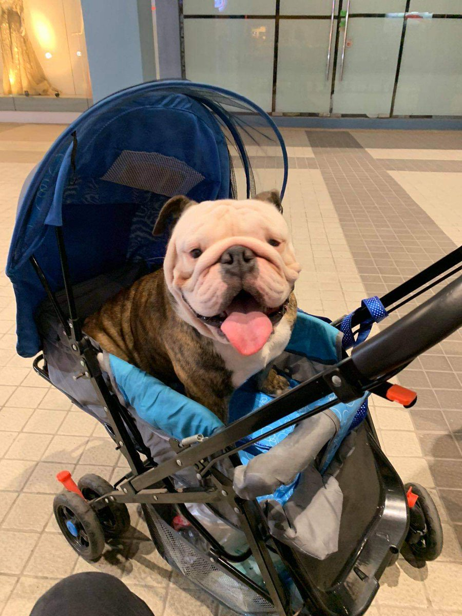 He has this stroller for walks in the mall that was only used once 😂