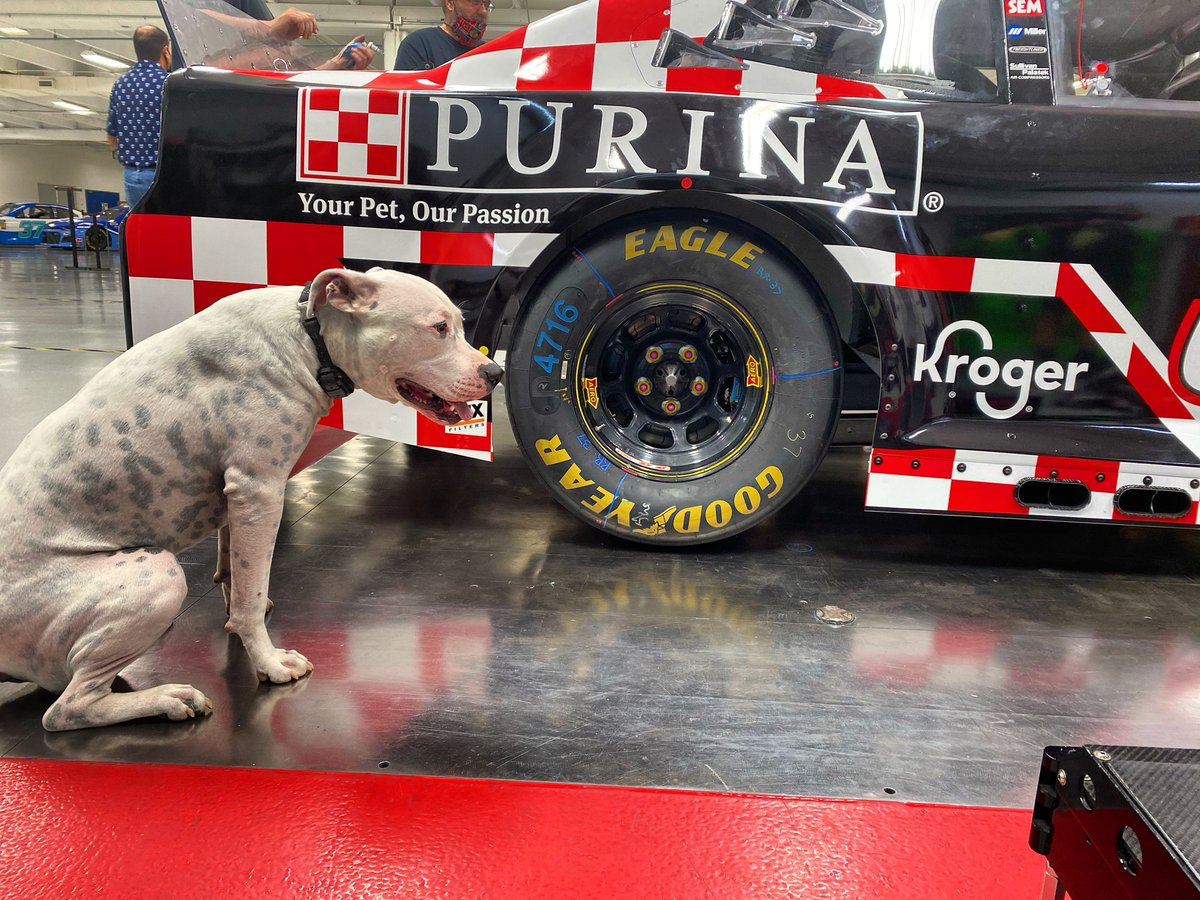 Gotta earn those @Purina treats, Memphis!