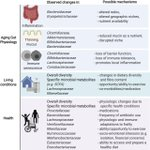 Image for the Tweet beginning: The Gut #Microbiota and Unhealthy