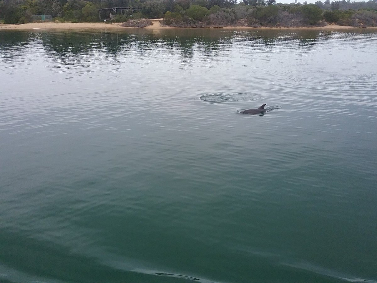 ..when you spot a little mate in the water...happier times 😔💚🙏 #LakesEntrance #GippslandLakes #Burrunan #Dolphins #Victoria https://t.co/rm7mybpM1A