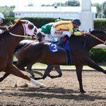 Image for the Tweet beginning: Ontario Quarter Horse racing all