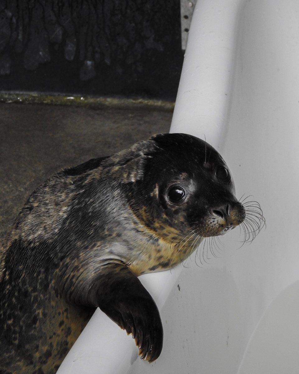 seal_rescue photo
