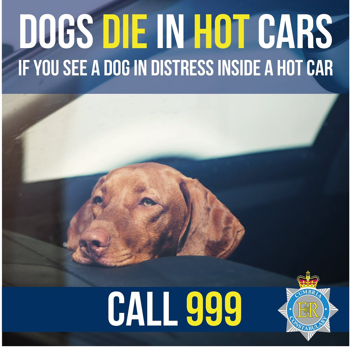 ❗ Dog's can die if left in hot cars❗ If you see a dog in a hot car in distress, call 999