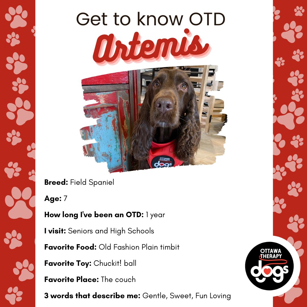 Artemis we will share our old-fashion plain timbits with you anytime!  #gettoknowOTD #ottawatherapydogs #therapydogthursday #therapydogs #notforprofit #animaltherapy #dogsheal #volunteer https://t.co/7IlUMyzPh7