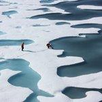 Image for the Tweet beginning: Si perdemos el Ártico, perdemos