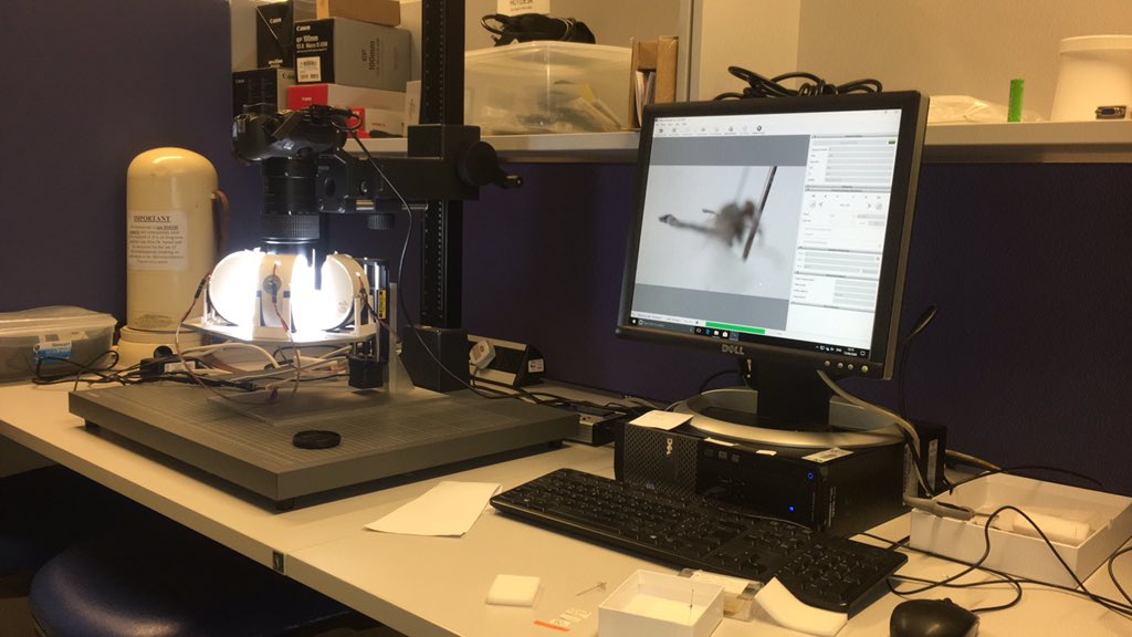 I spend a lot of time imaging specimens. These days we have a simple-to-use stacking system that even folks like me can master. Here I'm photographing Australian robberflies for an ongoing project #collections #FlyFriday #research #museums #taxonomy 1/3 https://t.co/03Kb7Z1vR1