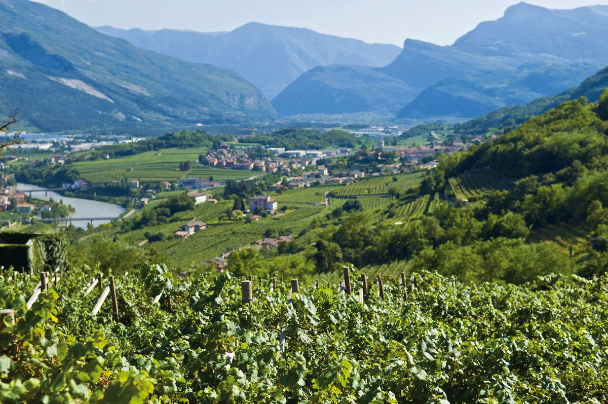The region of Trentino is famous not only for Trentodoc sparkling wine, but also for its beautiful summer hiking trails & steep winter ski slopes. 70% of Trentino is 1,000 meters above sea level & our 94 mountains are over 3,000m high offering fun adventures at any time of year. https://t.co/hhB2Rsd74S