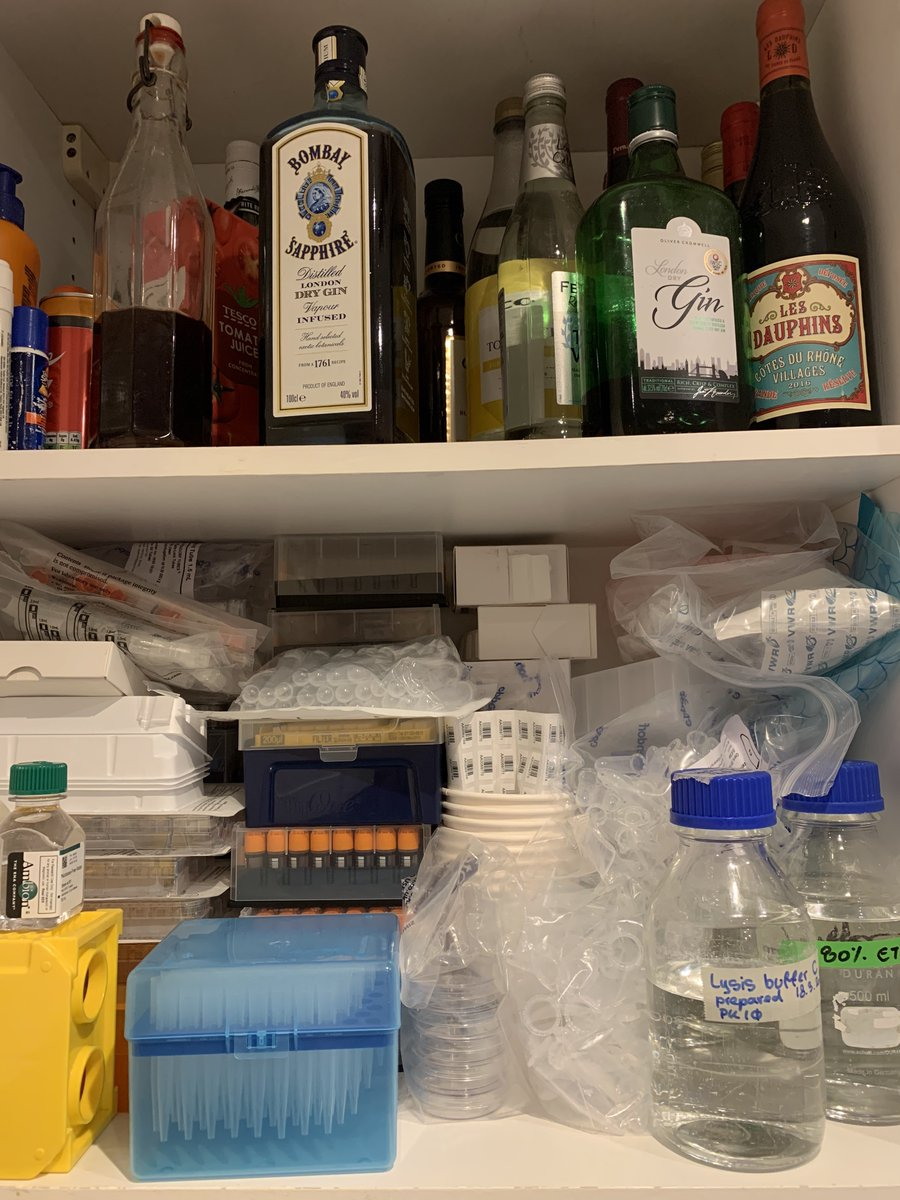 it's friday night and i'm drinking elderflower vodka i made on lockdown while thinking about ed ricketts (❤️) and tidepools (❤️) and i just want everyone to have a glimpse of my home lab. it's equal parts alcohol and consumables. this is how you science when you can't go to work. https://t.co/KuqnJHlsum