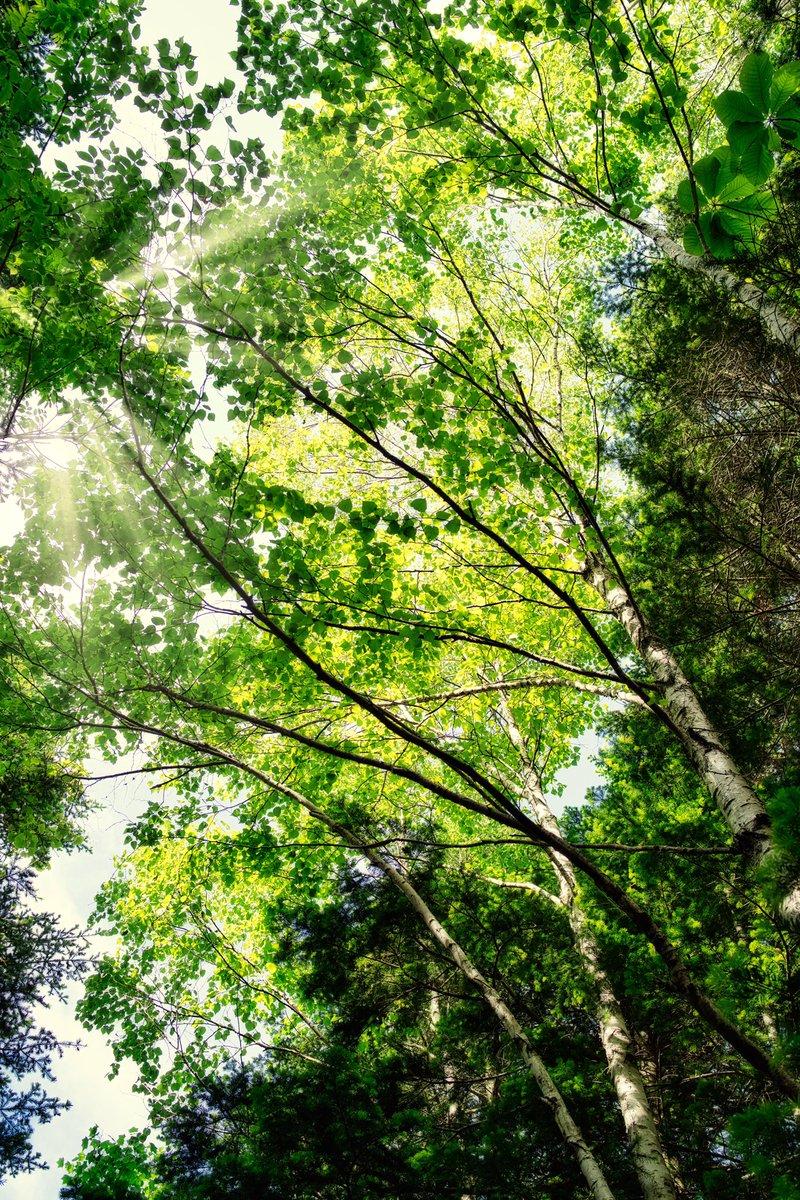6月の現像が、ようやく終わりそう。 #写真撮ってる人と繫がりたい  #写真好きな人と繫がりたい  #写真で伝える私の世界  #森の写真 #木漏れ日 https://t.co/QhEB0StAXG