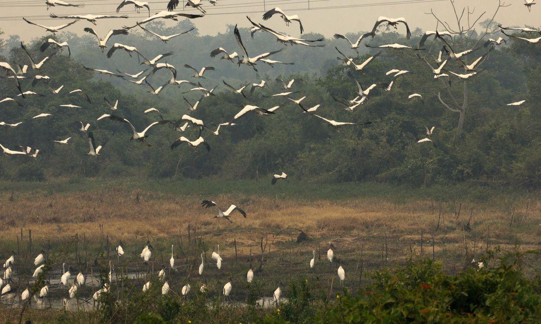 Operação registra redução de focos de calor no Pantanal. No dia 7 de agosto, eram 1.370 focos e agora foram registrados 368  https://t.co/1osdBoXnaV  📷 Chico Ribeiro/Governo do Mato Grosso https://t.co/pit3NqcIjM